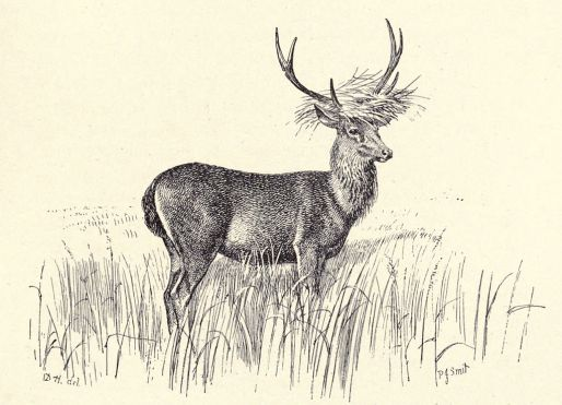 1024px-Douglas_Hamilton,_Curious_Hat_of_the_Rusa_Deer_in_Java..